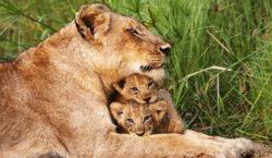kruger-national-park-wildlife-fp